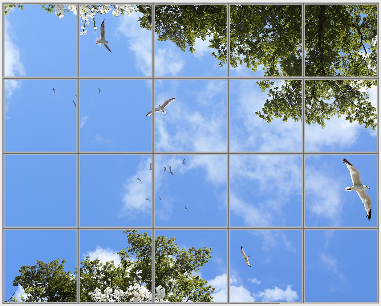 Birds Trees 20